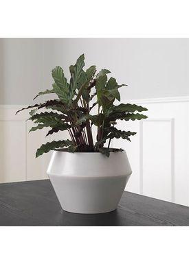 By Lassen - Flowerpot - Rimm Flowerpot - Cool Grey Large