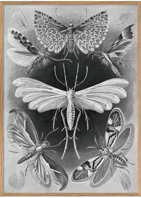 The Dybdahl Co - Poster - Alucita #8211 - Alucita