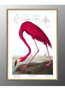 The Dybdahl Co - Poster - American Flamingo. Print #6500 - Flamingo