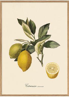 The Dybdahl Co - Poster - Citronier #3608 - Citronier