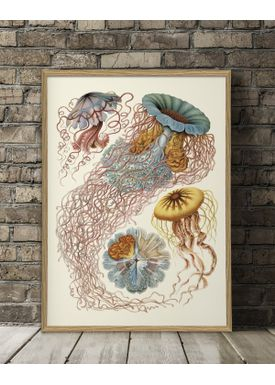 The Dybdahl Co - Poster - Discomedusae. Nature Poster #8200 - Nature Poster