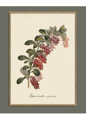 The Dybdahl Co - Poster - Epine Vinette #3601 - Epine