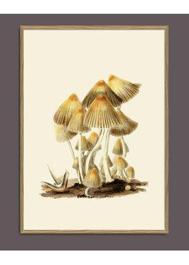 The Dybdahl Co - Poster - Fungi #2101 - Fungi