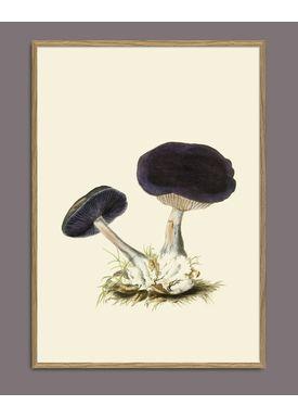 The Dybdahl Co - Poster - Fungi #2102 - Fungi