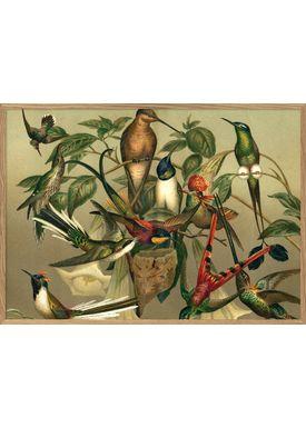 The Dybdahl Co - Poster - Hummingbirds. Horizontal #2905H - Hummingbirds
