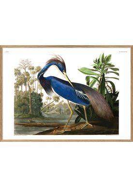The Dybdahl Co - Poster - Louisiana Heron. Print #6502 - Heron