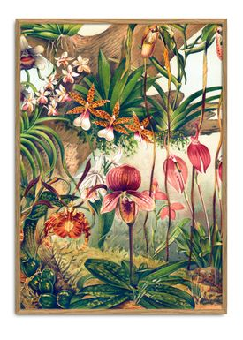 The Dybdahl Co - Poster - Orchids #2923 - Paper