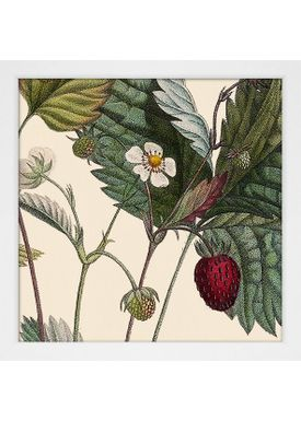 The Dybdahl Co - Poster - Plants #SQ109 - White Frame