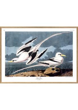 The Dybdahl Co - Poster - Tropic Bird #6529 - Bird