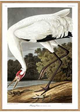 The Dybdahl Co - Poster - Whooping Crane #6524 - Crane
