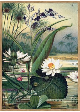 The Dybdahl Co - Poster - Water Plants left side #2924L - Left side