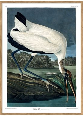 The Dybdahl Co - Poster - Wood Ibis #6516 - Wood Ibis