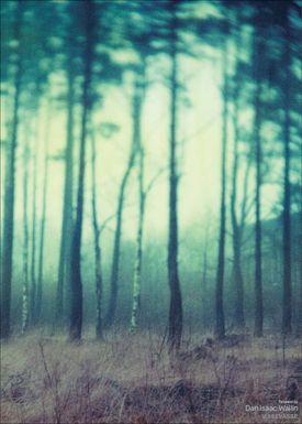 ViSSEVASSE - Poster - Dan Isaac Wallin - Fairyland - Fairyland