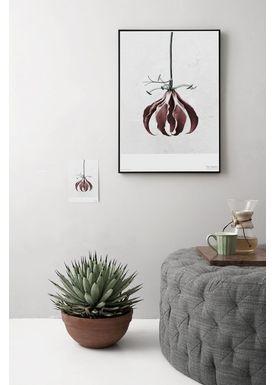 ViSSEVASSE - Poster - Vee Speers - Botanic Series - Gloriosa Superba