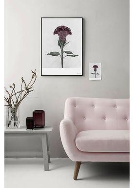 ViSSEVASSE - Poster - Vee Speers - Botanic Series - Celosia Cristata