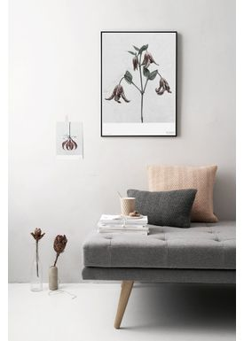 ViSSEVASSE - Poster - Vee Speers - Botanic Series - Clematis Integrifolia